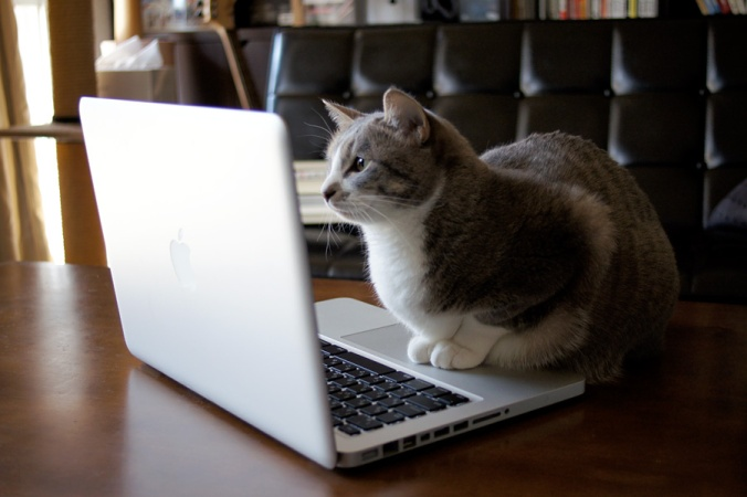 browsing_internet_cat_by_lowdope-d3bzspz