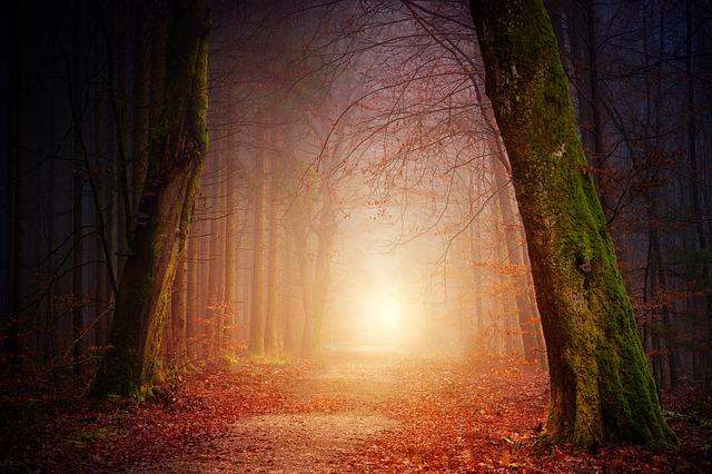 nature-3151869_640